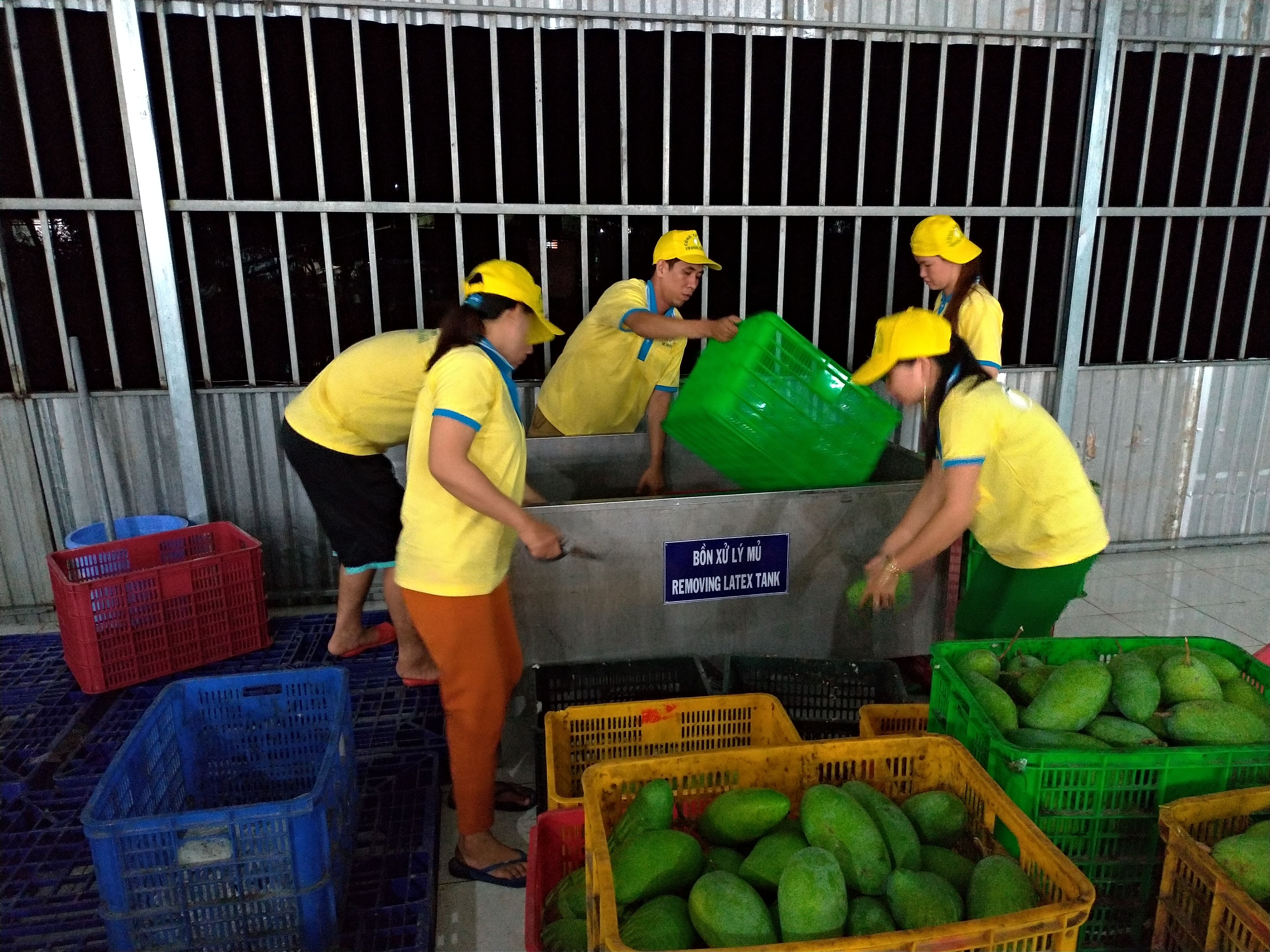 Innovative Technology To Improve The Quality Of Mango In The Mekong River Delta For Export Markets And Increase Local Farmers' Incomes
